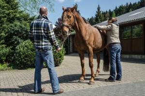 Behandeling bij Paarden 001