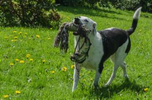 Honden 001